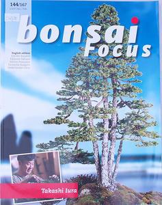 Bonsai focus - angielski nr 144