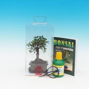 bonsai pokoju w pudełku