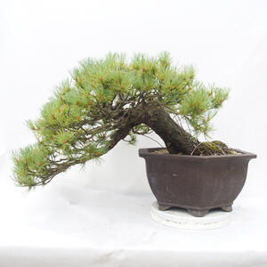 Ceramiczna miska bonsai 10,5 x 10,5 x 3 cm, kolor brązowy