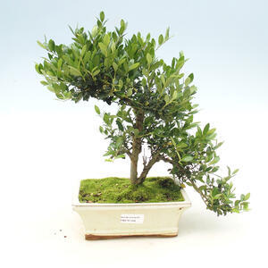 Keramická bonsai miska 9,5 x 9,5 x 12,5 cm, barva hnědomodrá