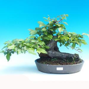 Outdoor bonsai - Grab