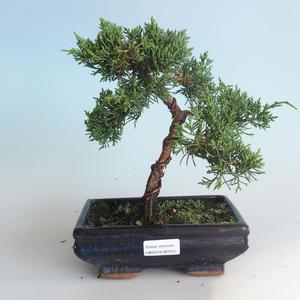Outdoor bonsai - Juniperus chinensis - chiński jałowiec 408-VB2019-26743
