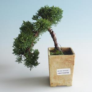 Outdoor bonsai - Juniperus chinensis - chiński jałowiec 408-VB2019-26769