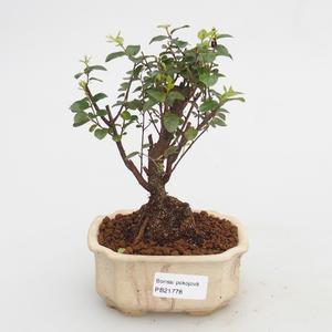bonsai Room - Sagerécie Thea - Sagerécie Thea