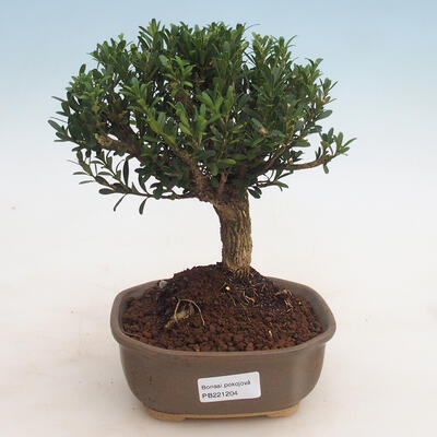 Ceramiczna miska bonsai 11 x 8 x 3 cm, kolor zielony - 1
