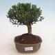 Ceramiczna miska bonsai 11 x 8 x 3 cm, kolor zielony - 1/4