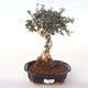 Ceramiczna miska bonsai - 1/3