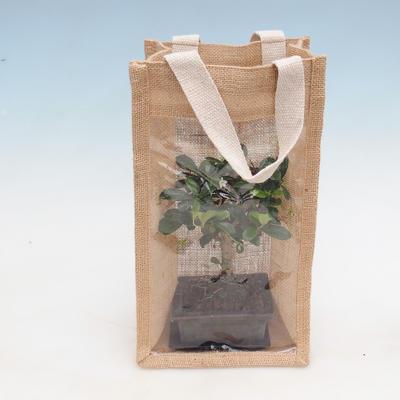 Bonsai pokojowe w woreczku prezentowym - JUTA - 1