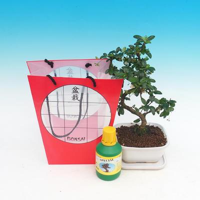 Bonsai pokojowe w torbie na prezent