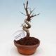 Ceramiczna miska bonsai 21 x 17 x 7 cm, kolor zielony - 1/4