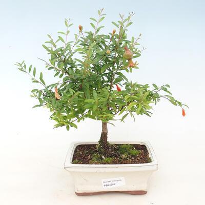 Mini miska bonsai 3 x 2,5 x 1,5 cm, kolor żółty - 1