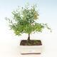 Mini miska bonsai 3 x 2,5 x 1,5 cm, kolor żółty - 1/3