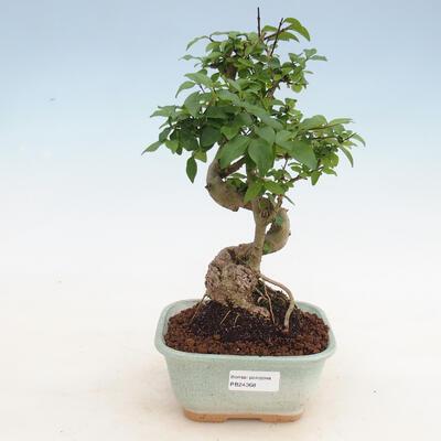 Ceramiczna miska bonsai 23 x 20 x 7 cm, kolor szary - 1