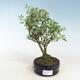 Ceramiczna miska bonsai 20,5 x 16,5 x 7 cm, kolor szary - 1/3