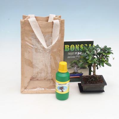 Bonsai pokojowe w woreczku prezentowym - JUTA