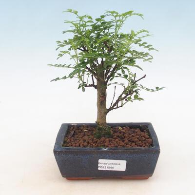 Ceramiczna miska bonsai 21,5 x 21,5 x 6,5 cm, kolor brązowy - 1