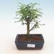 Ceramiczna miska bonsai 21,5 x 21,5 x 6,5 cm, kolor brązowy - 1/3