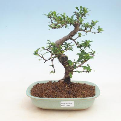 Ceramiczna miska bonsai 23,5 x 23,5 x 7 cm, kolor beżowy - 1