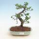 Ceramiczna miska bonsai 23,5 x 23,5 x 7 cm, kolor beżowy - 1/3