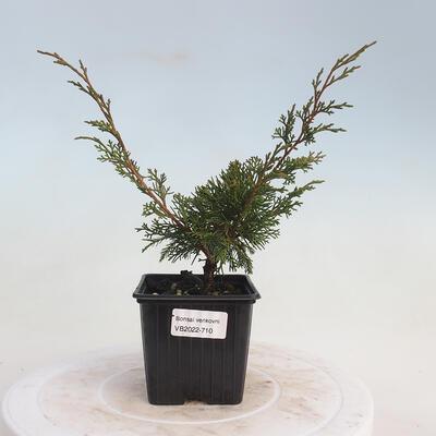 Miska Bonsai 42 x 23 x 8,5 cm, kolor szaro-beżowy - 1
