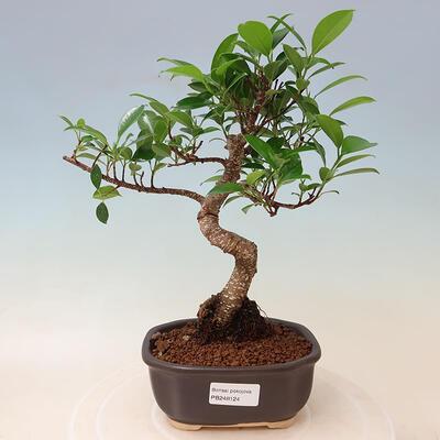 Ceramiczna miska bonsai 19 x 19 x 6,5 cm, kolor spękany czerwony - 1