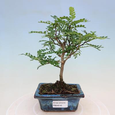 Ceramiczna miska bonsai 17 x 17 x 7,5 cm, kolor szaro-zielony - 1