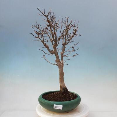 Ceramiczna miska bonsai 10,5 x 9 x 4,5 cm, kolor brązowy - 1