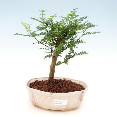 Miska Bonsai 32 x 24,5 x 7,5 cm, kolor szaro-beżowy - 1