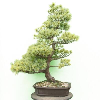 Miska Bonsai 30,5 x 23,5 x 9,5 cm, kolor szary - 1