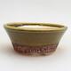 Outdoor bonsai -Malus Halliana - owocach jabłoni - 1/4