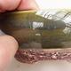 Outdoor bonsai - grab - Carpinus betulus - 2/5