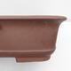 Outdoor bonsai -Malus Halliana - owocach jabłoni - 2/4