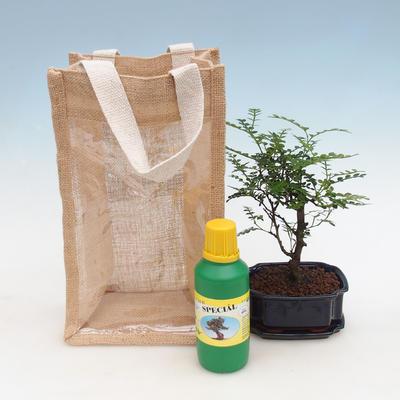 Bonsai pokojowe w woreczku prezentowym - JUTA - 2