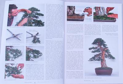 Bonsai i ogród japoński No.48 - 2