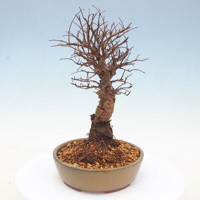 Suiseki - kamień z DAI (drewniana mata) - 2