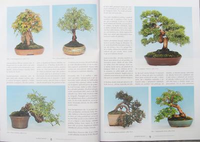 Bonsai i Ogród Japoński No.51 - 2