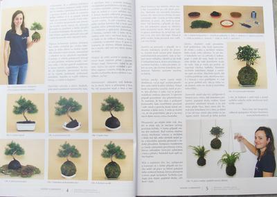 Bonsai i ogród japoński nr 52 - 2