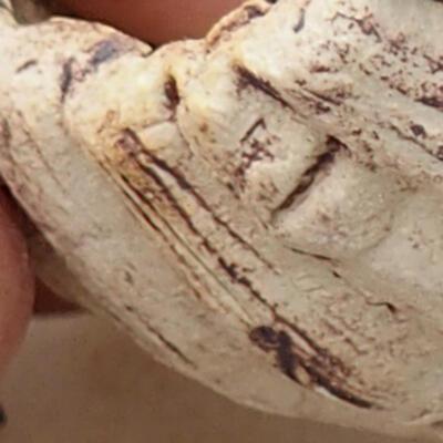 Powłoka ceramiczna 7 x 7 x 5,5 cm, szaro-brązowa - 2