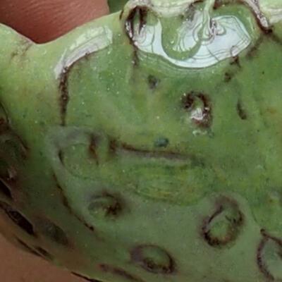 Powłoka ceramiczna 7,5 x 7 x 6 cm, kolor zielony - 2