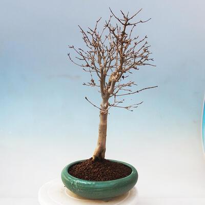 Ceramiczna miska bonsai 10,5 x 9 x 4,5 cm, kolor brązowy - 2