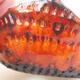 Powłoka ceramiczna 7,5 x 7 x 4 cm, kolor pomarańczowy - 2/3