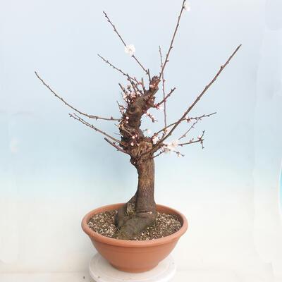 Miska Bonsai 24 x 19 x 7,5 cm, kolor beżowy - 2