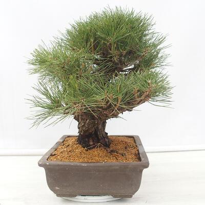 Miska Bonsai 22 x 17 x 7 cm, kolor szaro-beżowy - 2