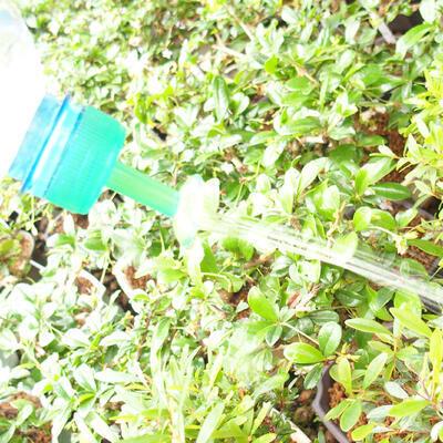Zraszacz Bonsai do butelek PET 5szt - 2