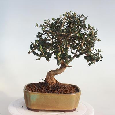 Miska Bonsai 37 x 26 x 11 cm, kolor szaro-beżowy - 3