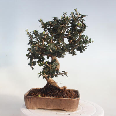 Miska Bonsai 42 x 23 x 8,5 cm, kolor szaro-beżowy - 3