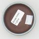 Ceramiczna miska z bonsai - 3/3