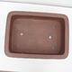 Outdoor bonsai -Malus Halliana - owocach jabłoni - 3/4