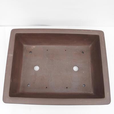Outdoor bonsai -Malus Halliana - owocach jabłoni - 3