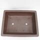 Outdoor bonsai -Malus Halliana - owocach jabłoni - 3/5